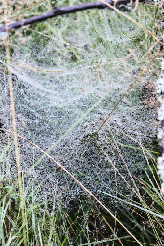 Edderkoppekursus i Høsterkøbhus