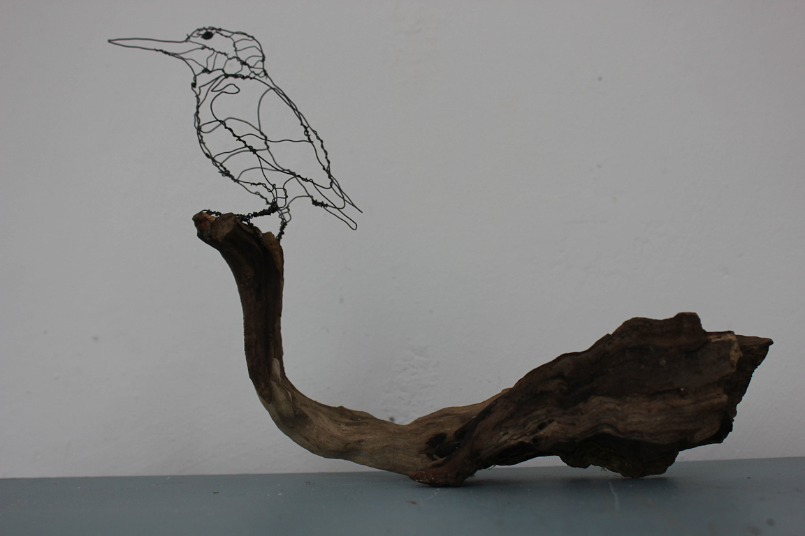 Isfugl, martin – pêcheur, kingfisher