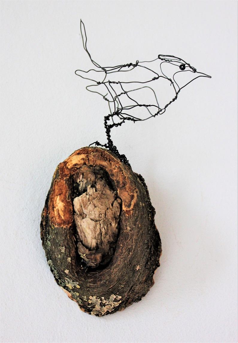 Fuglekonge, mignon, goldchest
