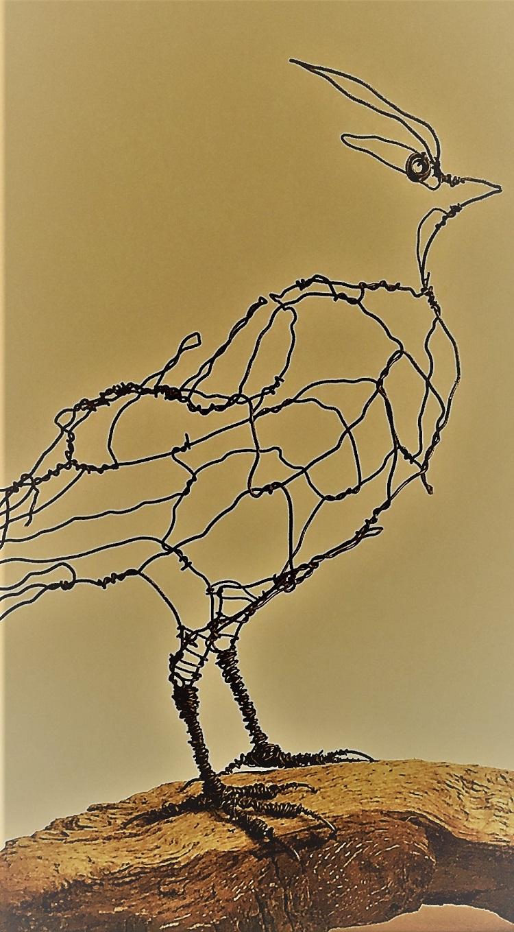 Silkehale, Queue de soie , silk tail