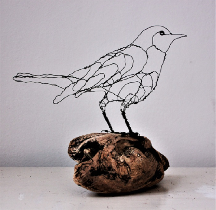 Solsort, Merle, blackbird
