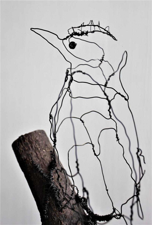 Spætte, pivert, woodpicker
