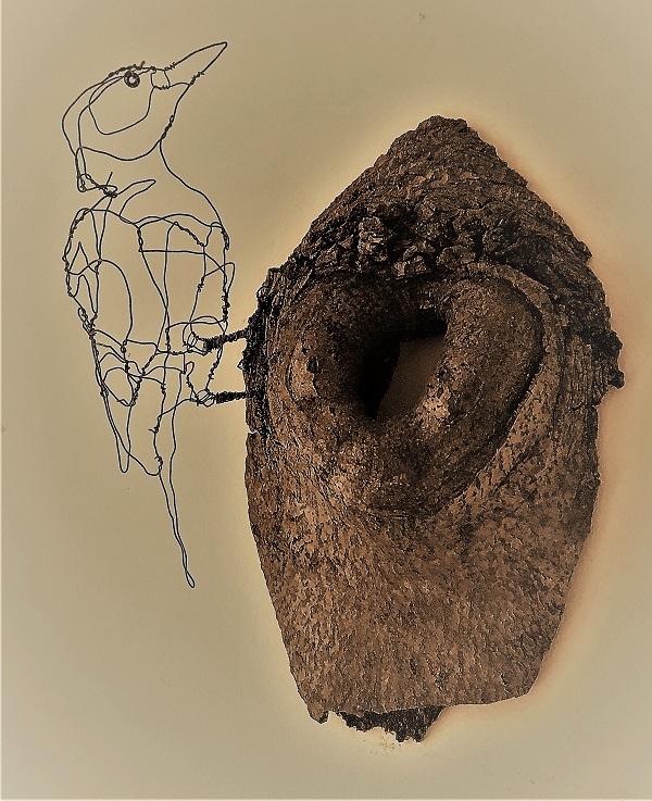 Spætte, pivert, woodpicker (4)